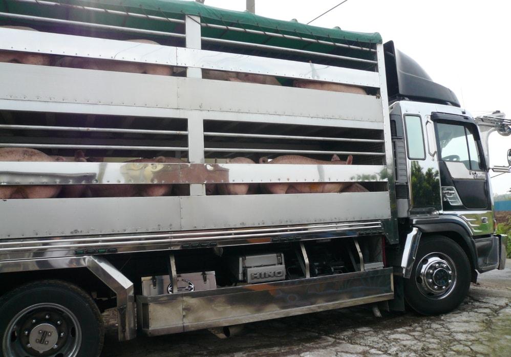林SPF出荷トラック